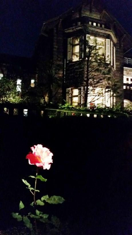 春バラのライトアップ