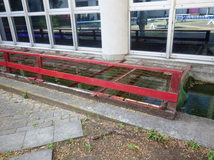 池の木柵取替前