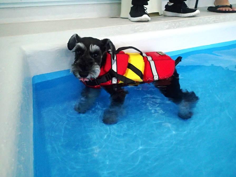 泳ぐワンちゃん